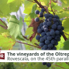 The vineyards of the Oltrepo Pavese |Italia Slow Tour