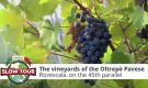 The vineyards of the Oltrepo Pavese |Italia Slow Tour